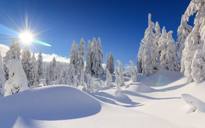 Vancouver, British Columbia, Canada, Vancouver, British Columbia, Canada, winter, snow, drifts, trees, spruce
