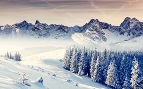puesta del sol, invierno, Montañas, árboles, derivas, paisaje