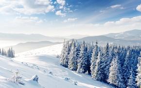 invierno, nieve, árboles, derivas, paisaje