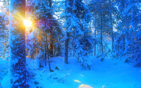 winter, forest, trees, sunset, snow, drifts, landscape