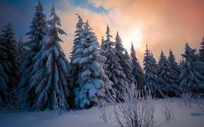 pôr do sol, inverno, neve, árvores, drifts, paisagem