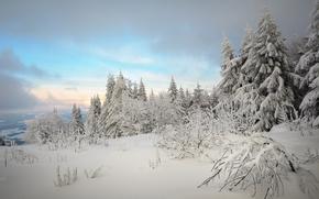 Proeller Peak, St Englmar, Foresta Bavarese, Germania, foresta, alberi, inverno, nevicata, derive, paesaggio