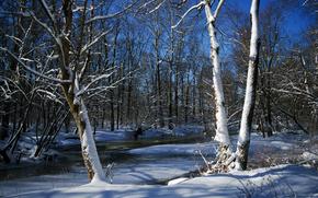 冬, 川, 森, 木, ドリフト, 風景