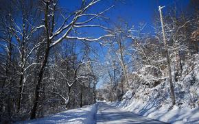 冬, 道路, 森, 木, 風景
