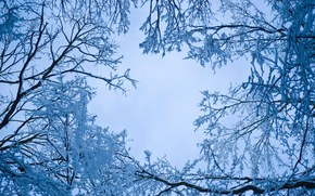 зима, небо, ветки деревьев, природа
