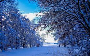 winter, snow, trees, drifts, landscape