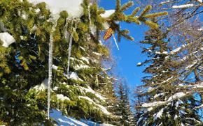 inverno, foresta, alberi, Ghiaccioli, natura