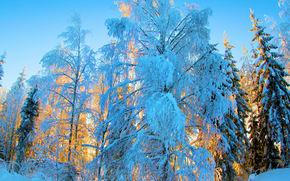 зима, снег, закат, деревья, сугробы, пейзаж