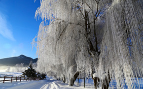Lavington Coldstream, British Columbia, Canada, winter, road, trees, landscape