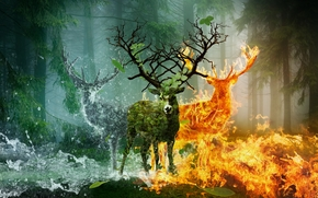 forest, trees, deer, fire, water