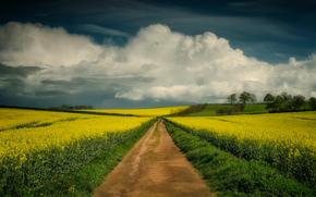 field, Flowers, road, landscape