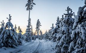 coucher du soleil, hiver, arbres, dérives, route, paysage