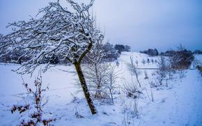 закат, зима, снег, деревья, пейзаж