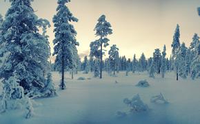 закат, зима, снег, деревья, пейзаж, панорама