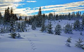 sunset, winter, snow, trees, landscape, traces