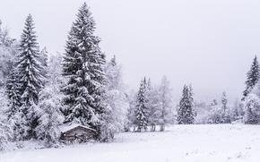 hiver, neige, arbres, cabine, paysage
