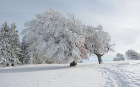 winter, snow, footpath, trees, landscape