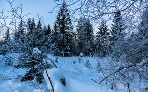 sunset, winter, snow, trees, landscape