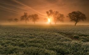 tramonto, campo, alberi, nebbia