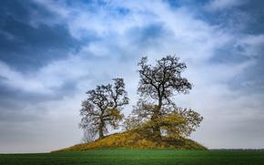 field, hill, trees, landscape