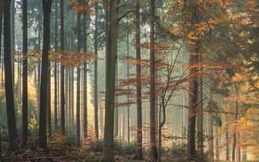 forest, nature, trees, bush, light, autumn, foliage