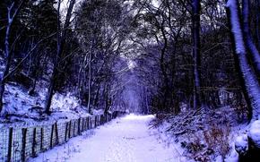лес, деревья, дорога, зима, забор, пейзаж