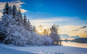 invierno, puesta del sol, árboles, nieve, derivas, paisaje