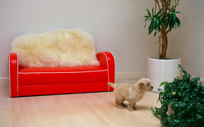 dog, puppy, sofa, red, room, fur, plants