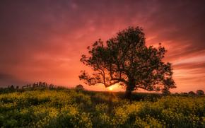 tramonto, campo, Fiori, albero, paesaggio