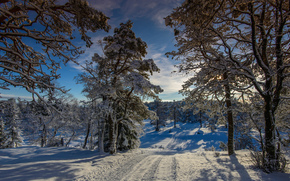 sunset, winter, forest, trees, traces, road, landscape