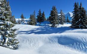 invierno, puesta del sol, nieve, árboles, paisaje