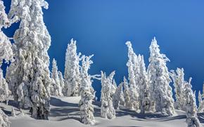 hiver, coucher du soleil, neige, arbres, paysage
