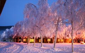 inverno, alberi, domestico, paesaggio
