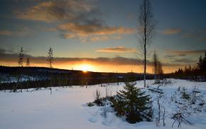 zima, zachód słońca, śnieg, drzew, krajobraz