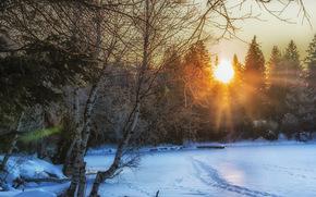 inverno, tramonto, nevicata, alberi, paesaggio
