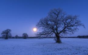 hiver, domaine, coucher du soleil, arbres, paysage