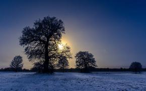 zima, pole, zachód słońca, drzew, krajobraz