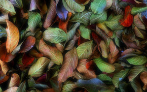 TEXTURE, Texture, design, background, Design backgrounds, autumn leaves