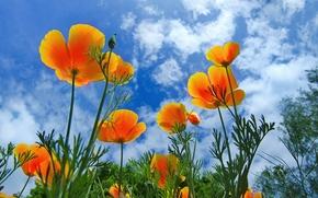 Flowers, sky, flora