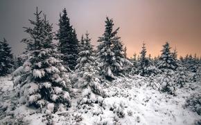 tramonto, inverno, alberi, paesaggio