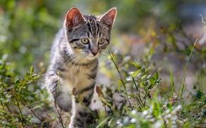 котёнок, игра, животное