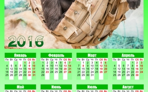 Calendar for 2016, calendar with a monkey, 2016