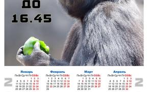 Calendario para 2016, calendario con un mono, 2016
