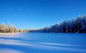 winter, snow, trees, drifts, landscape