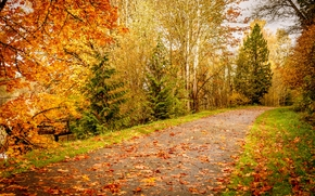 Indian summer, road, forest, trees, autumn leaves, landscape