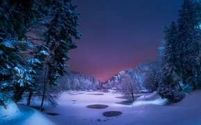 winter, lake, forest, snow, night