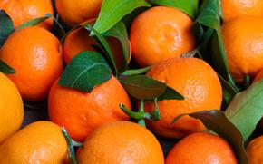 tangerinas, fruta, tsytrusy, comida