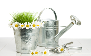 watering can, bucket, Chamomile