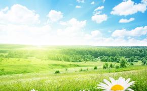 поле, ромашки, пейзаж