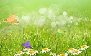поле, ромашки, трава, бабочки, макро